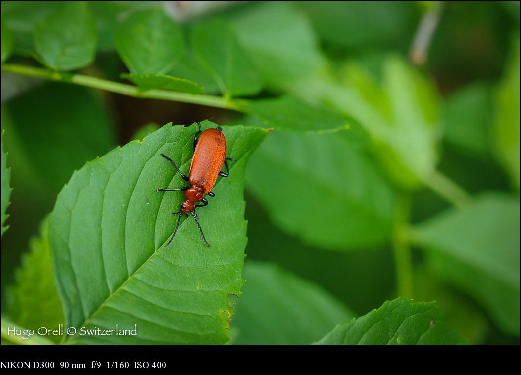 insectos-5141