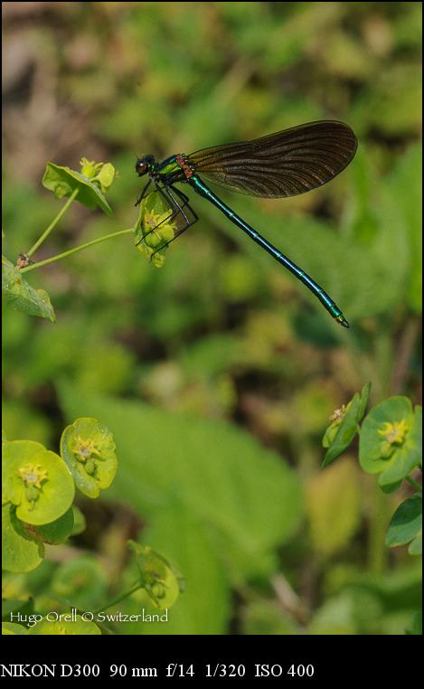 insectos-5214