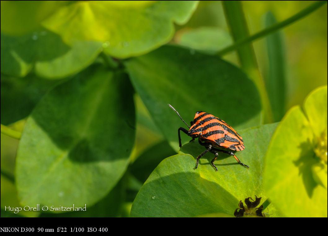 insectos-5247
