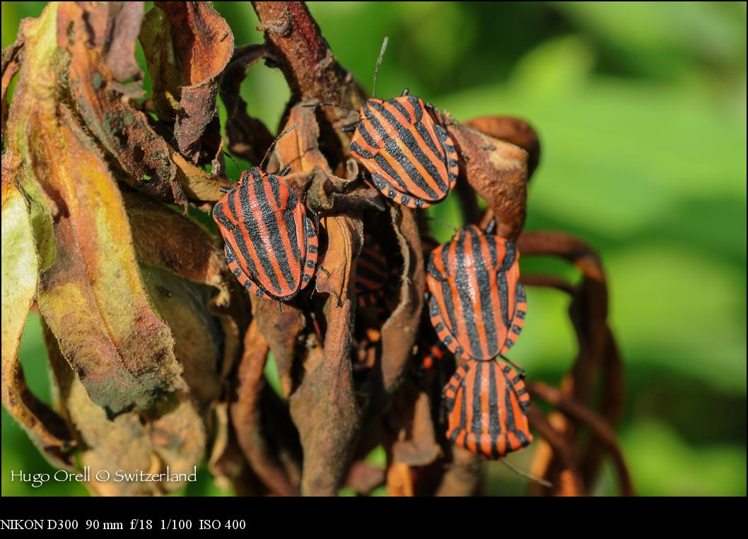 insectos-5248