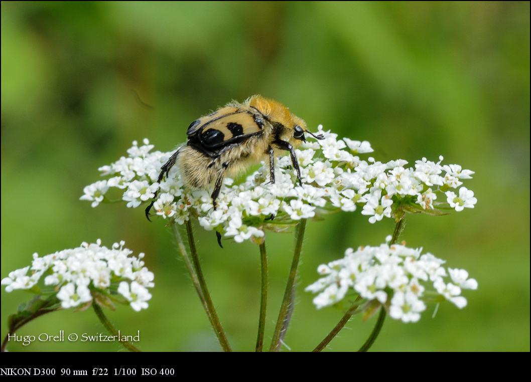 insectos-5266