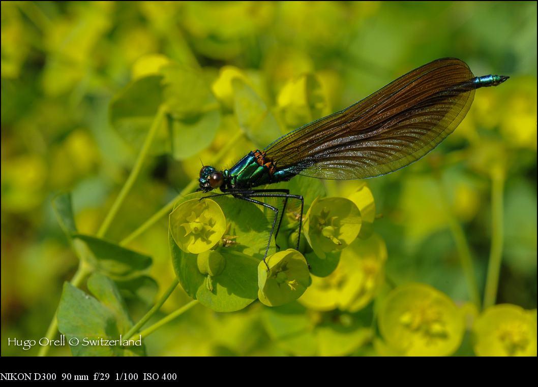 insectos-5268
