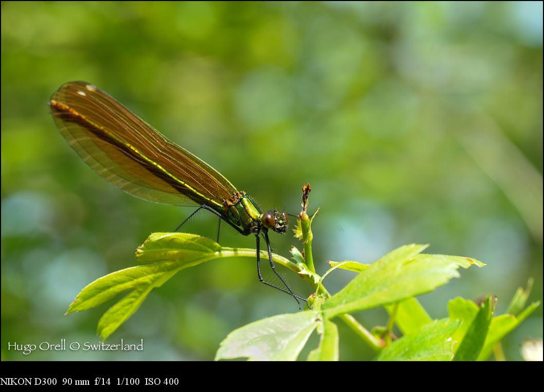insectos-5298