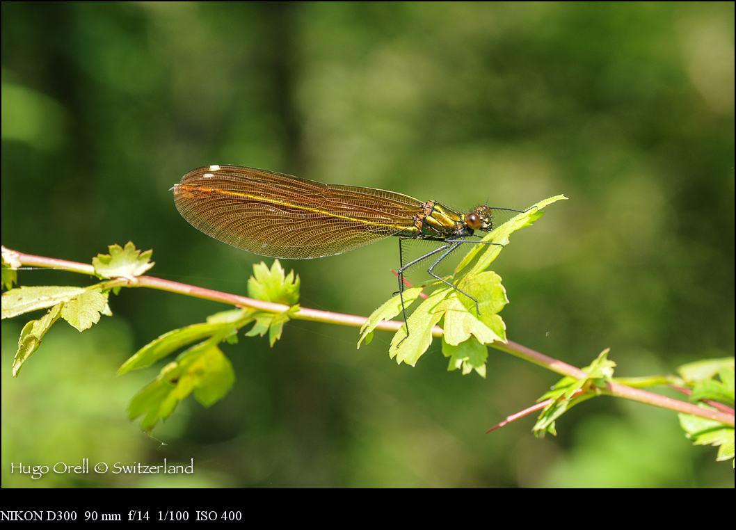insectos-5299