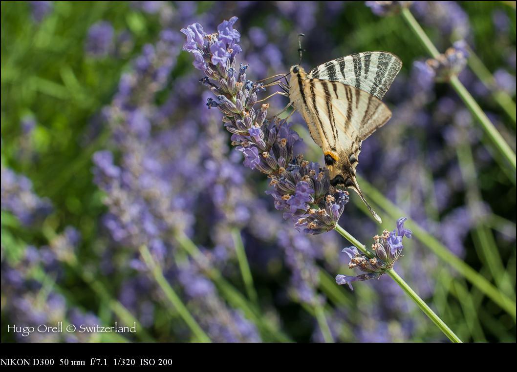insectos-5573