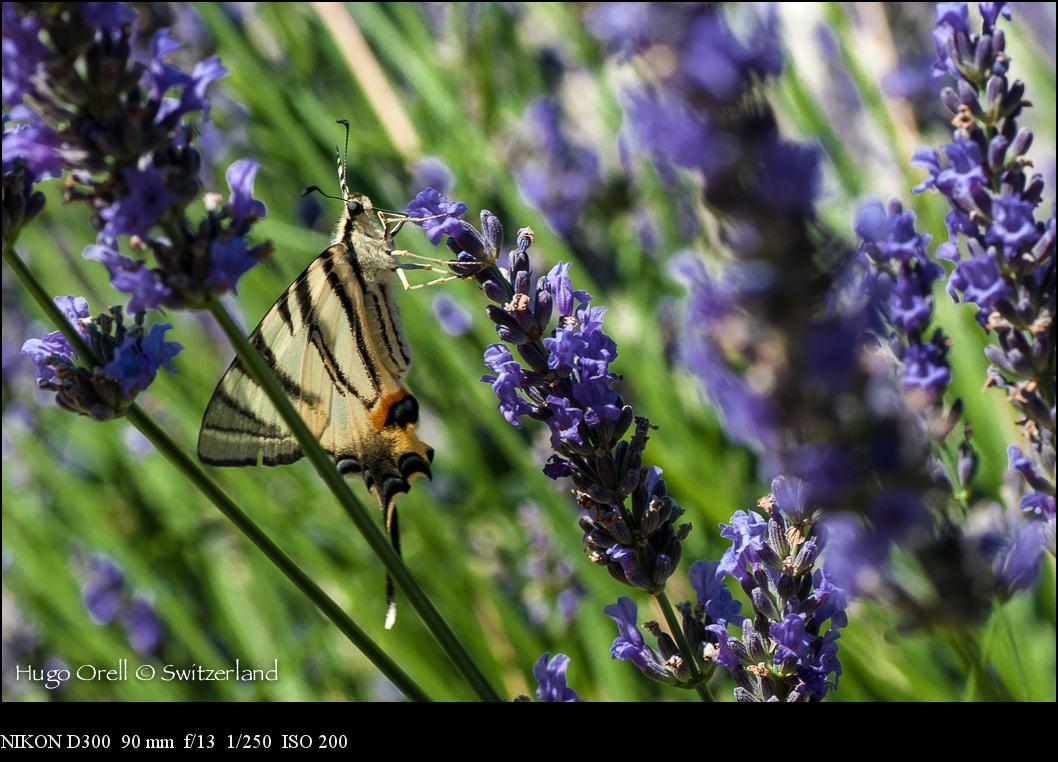 insectos-5604
