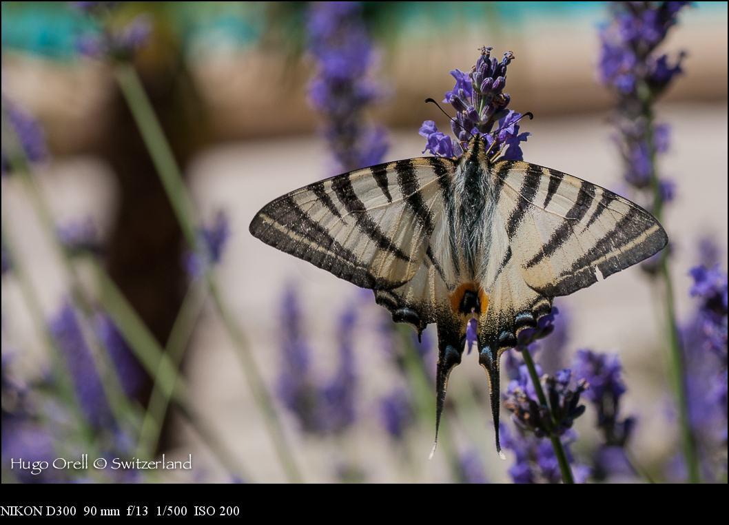 insectos-5607