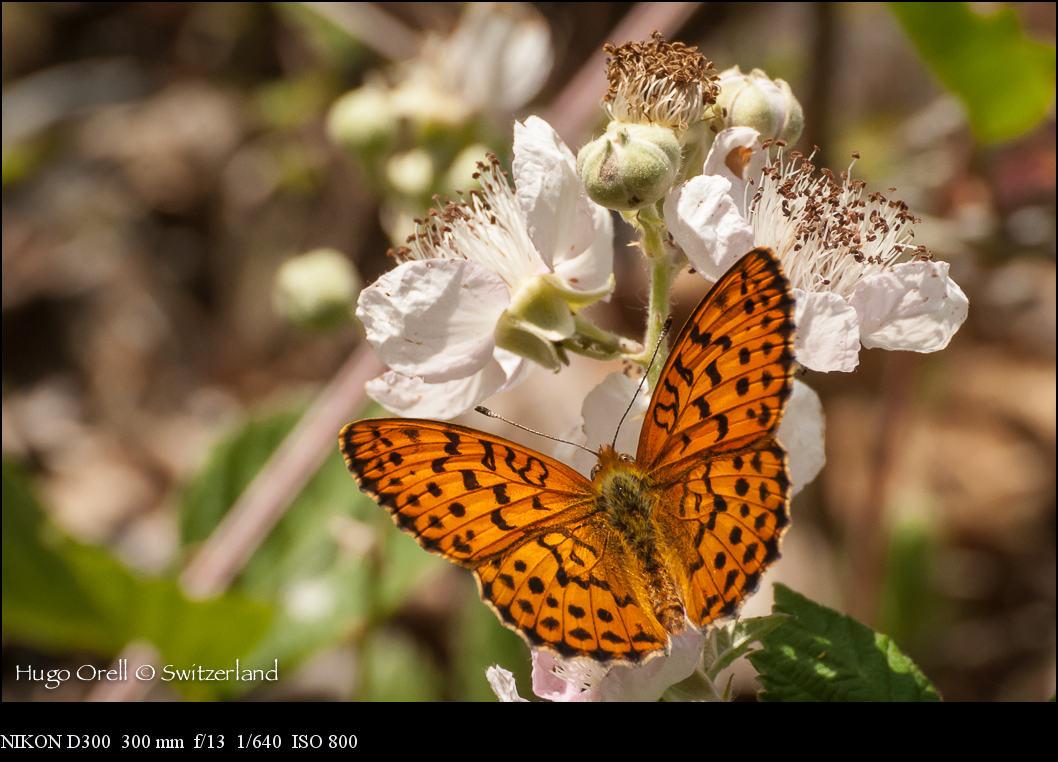 insectos-6322