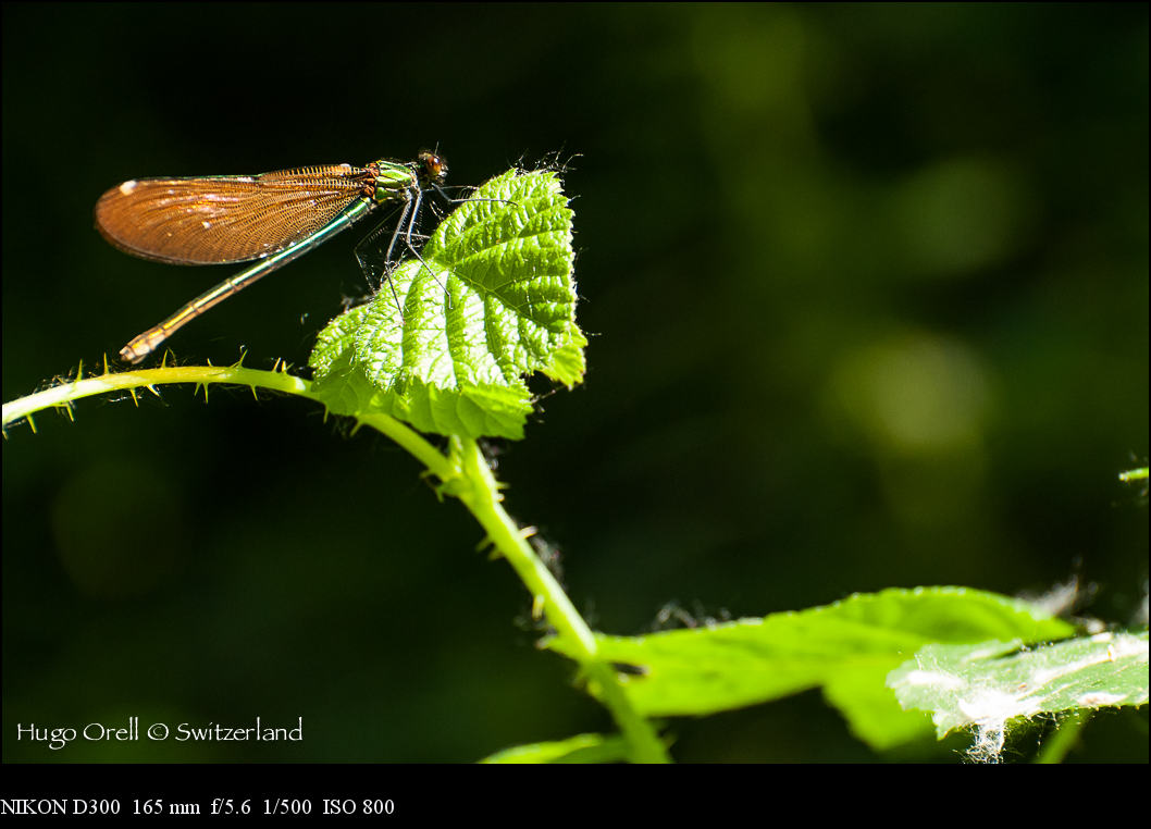 insectos-6341