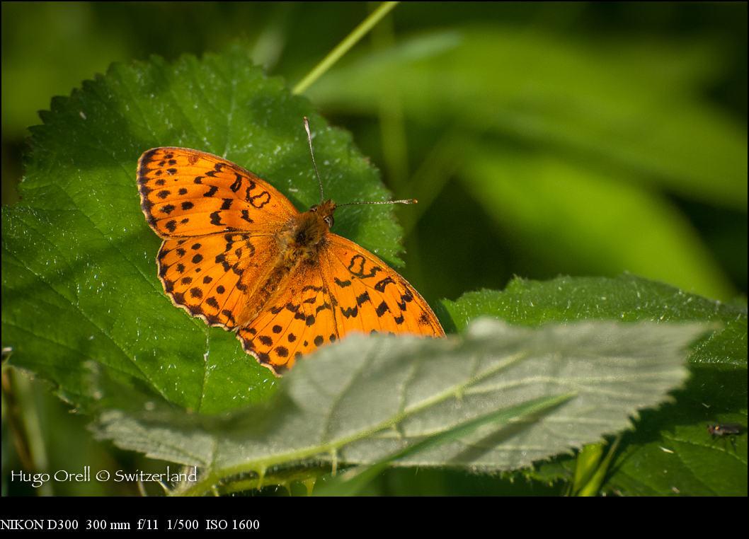 insectos-6423