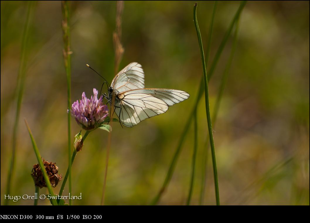 insectos-6448