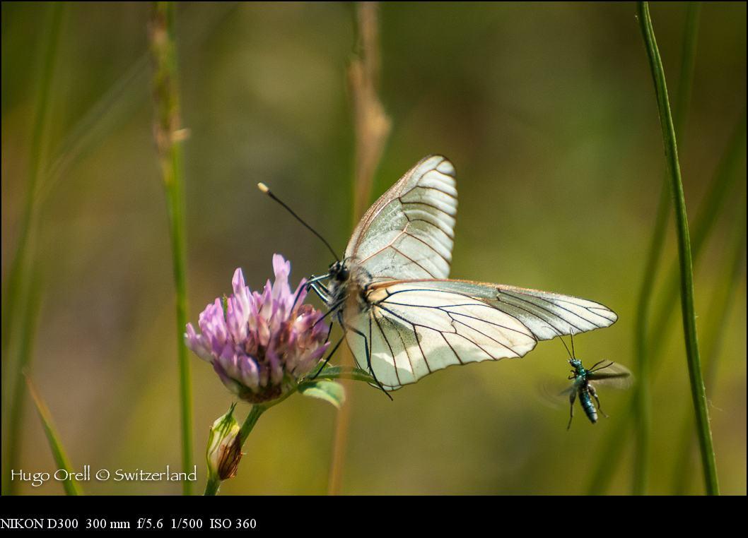 insectos-6450