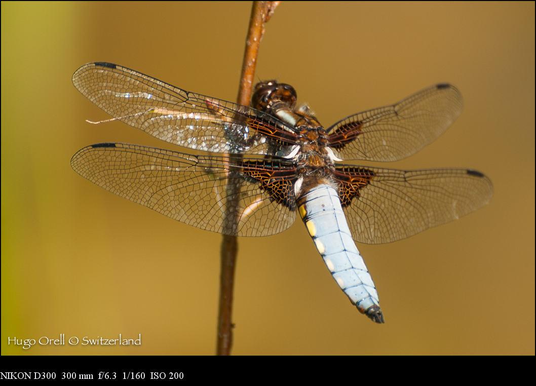 insectos-6917