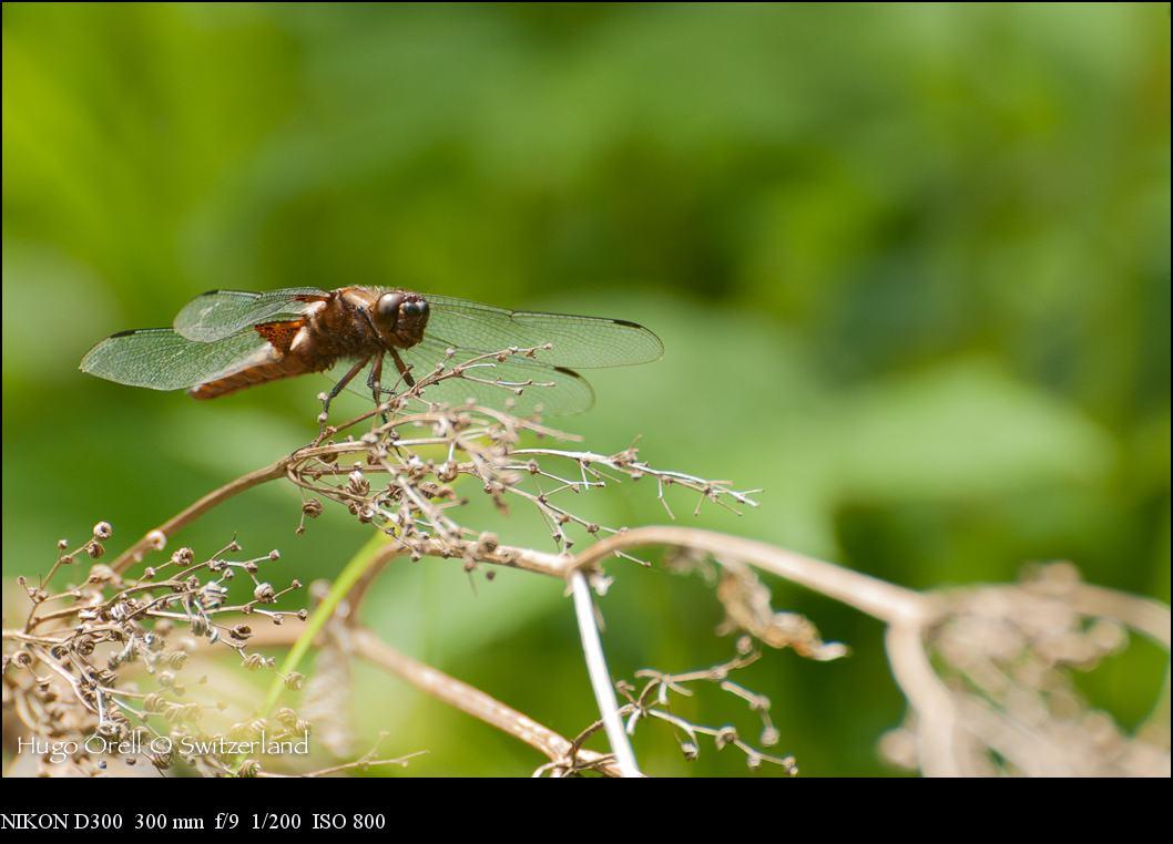 insectos-6929