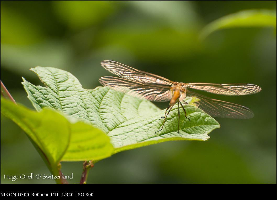 insectos-6935